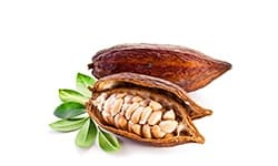 Ekstrakt z kakaowca